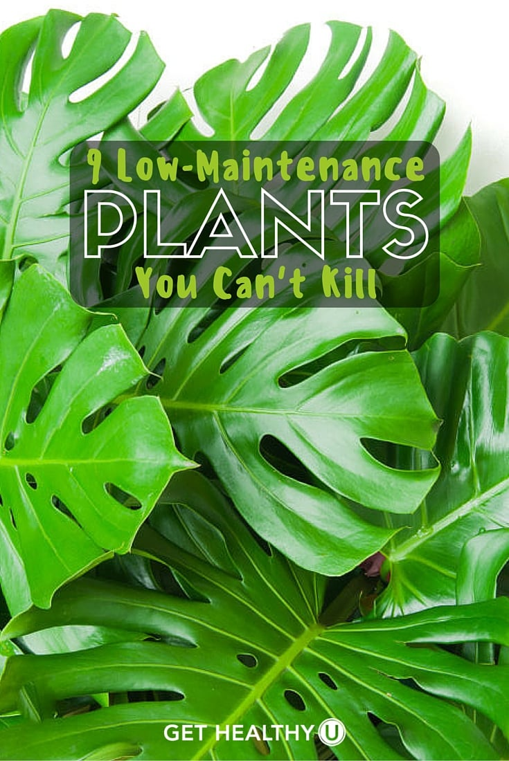 9 Low Maintenance Plants You Can't Kill - Get Healthy U